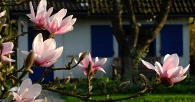 casasmart vendere casa con giardino